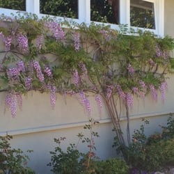 Photo Of Les Jardiniers, The Art Of Gardening   Oakland, CA, United States  ...