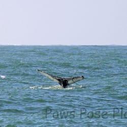 Photo Of Whale Watching Tour By The Virginia Aquarium Beach Va United