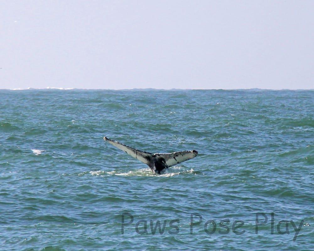 Whale Watching Tour By The Virginia Aquarium Whale