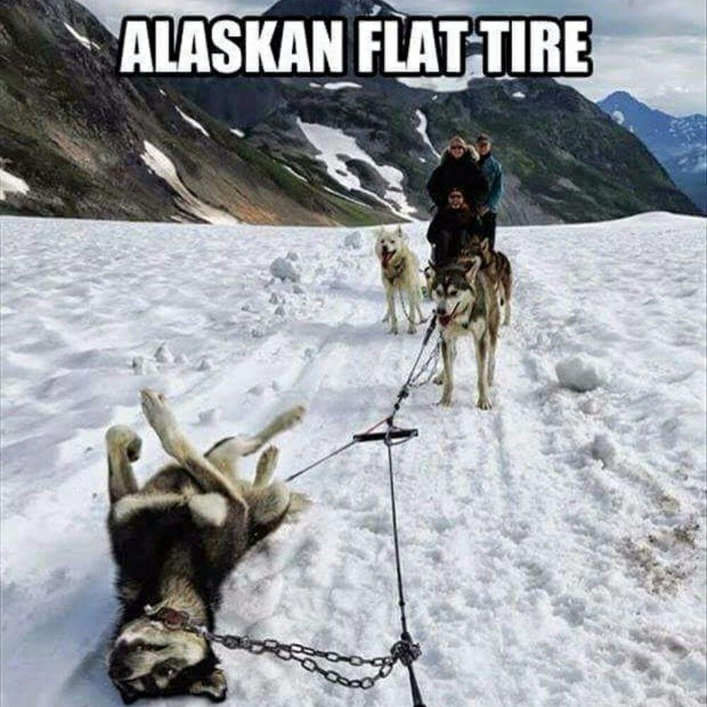 Alaska Taxi & Tours