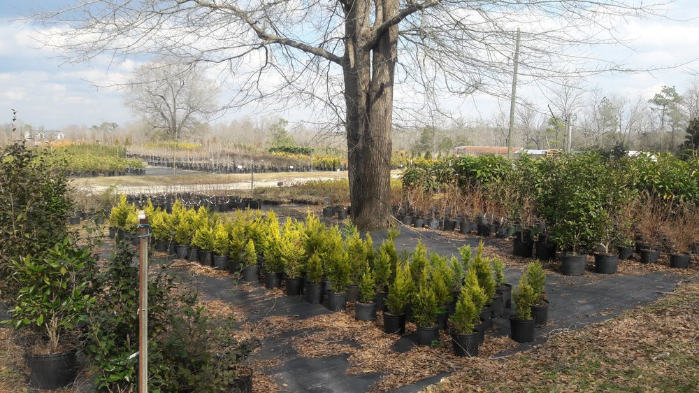Wind In The Willows Nursery: 4594 Timrod Rd, Bethune, SC