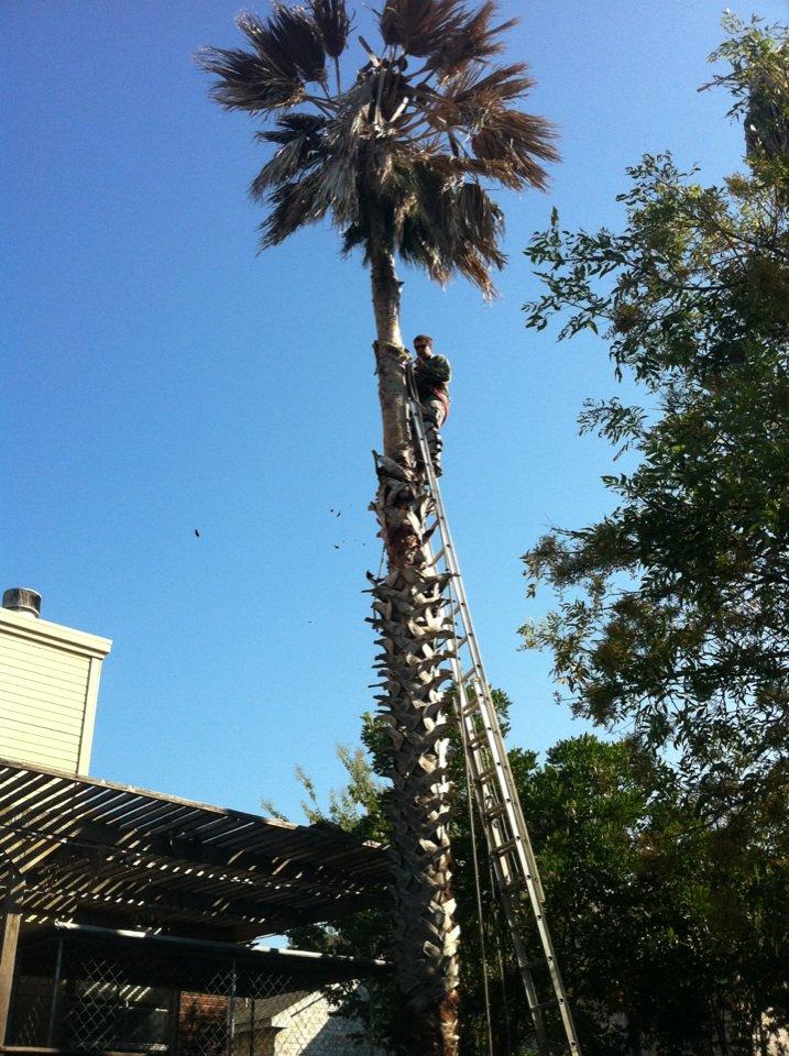 Canopy Tree Service