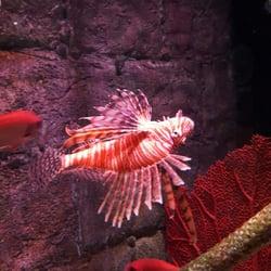 sea life kansas city aquarium 53 photos 74 reviews aquariums 2475 grand blvd kansas. Black Bedroom Furniture Sets. Home Design Ideas