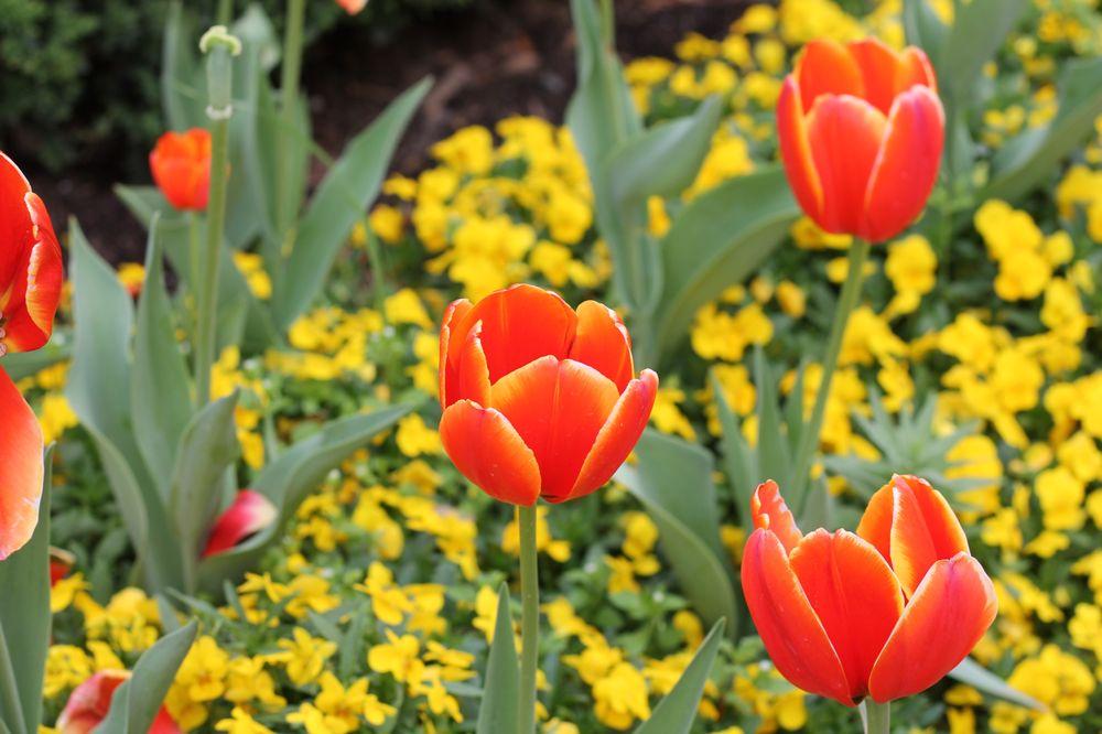 Fort Worth Botanic Garden: 3220 Botanic Garden Blvd, Fort Worth, TX