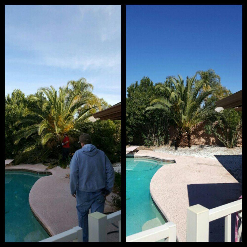 Property Clean-Up & Landscaping: 13903 N Stone Palisade, Marana, AZ