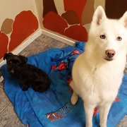 Just Like Home Doggie Hotel And Grooming Las Vegas Nv