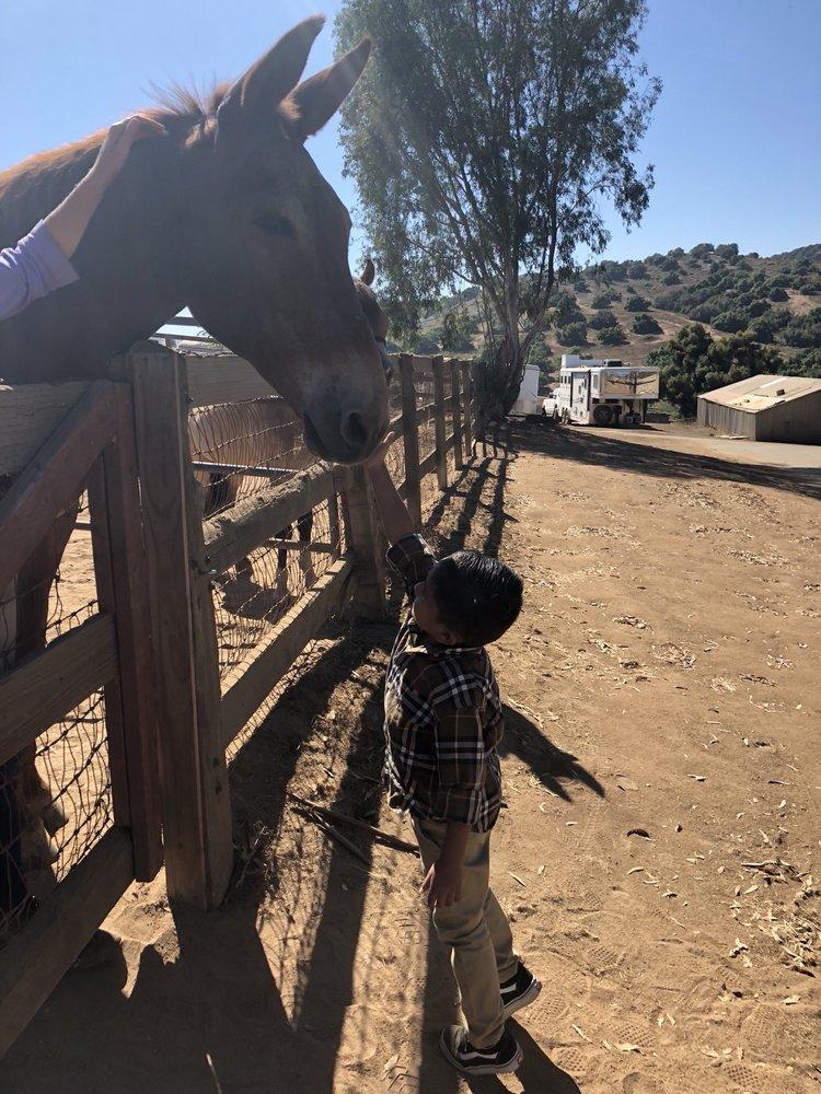 Horse Spirit Ranch: 3712 Valle Del Sol, Bonsall, CA