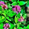 Bellingrath Gardens and Home: 12401 Bellingrath Gardens Rd, Theodore, AL