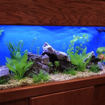 Photo Of Infinity Aquarium Design Las Vegas Nv United States Select Your