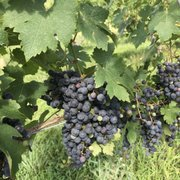 Russian Chapel Hills Winery - 15 Photos - Wineries - 2662 Green