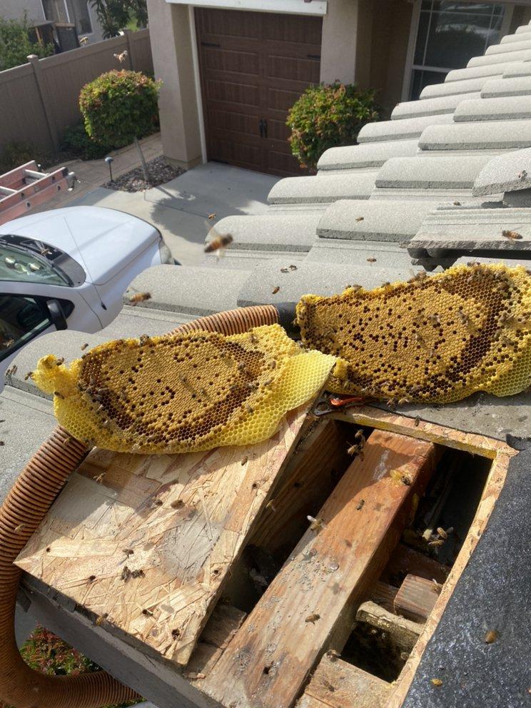 Aliza's Bee Removal Service