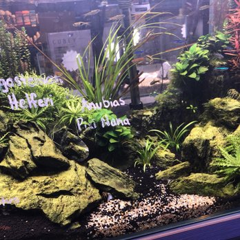 Age of Aquariums - 2642 Cherry Ave, Signal Hill, CA - 2019