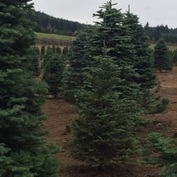 Parson Landing Christmas Tree Farm - CLOSED - Christmas Trees ...