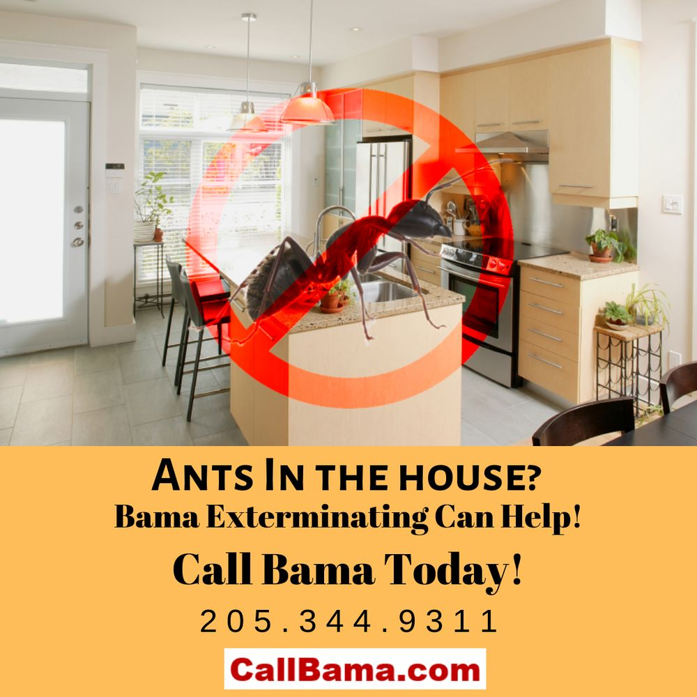 Bama Exterminating: 2800 9th St, Northport, AL