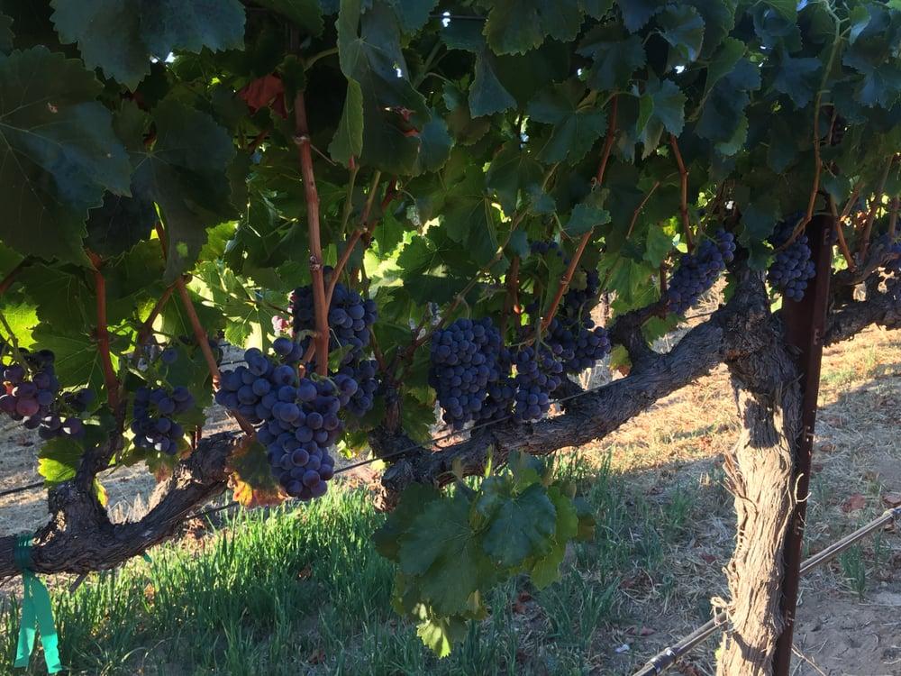 The Farm Winery