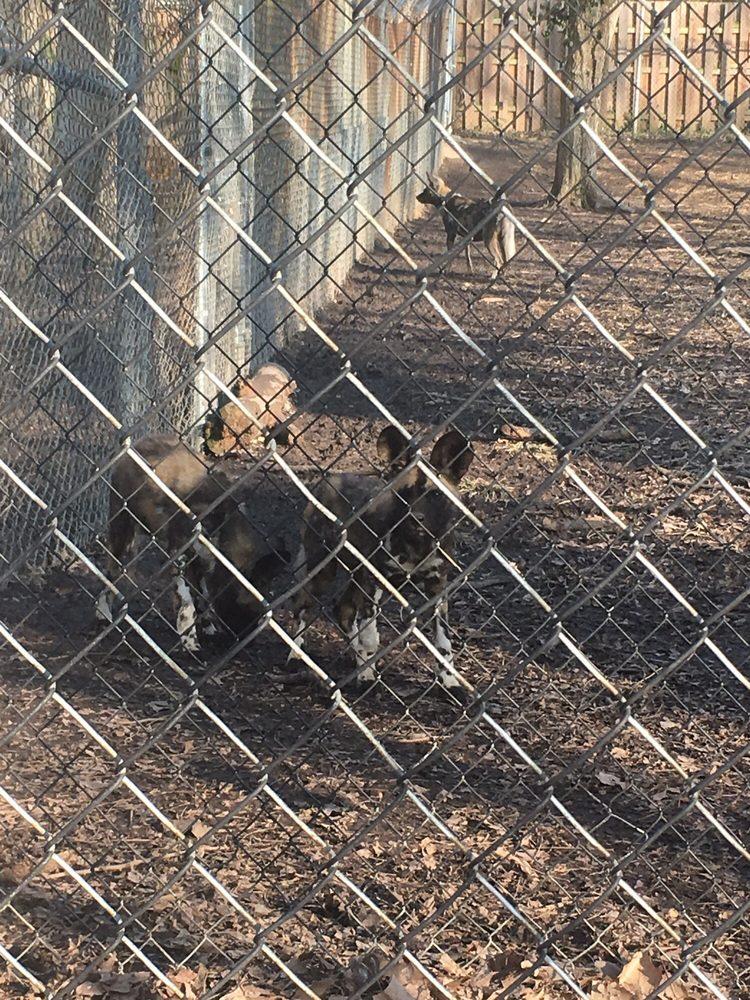 Endangered Wolf Center: 6750 Tyson Valley Rd, Eureka, MO