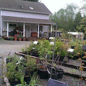 Woodbrook Nursery Nurseries Gardening 5919 78th Ave