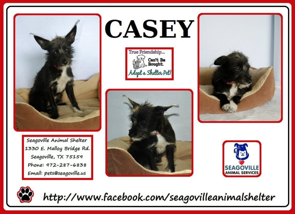 Seagoville Animal Shelter: 1330 E Malloy Bridge Rd, Seagoville, TX