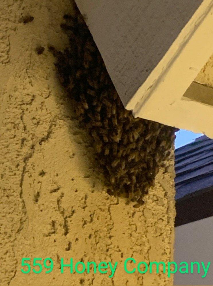559 Honey Company: Kingsburg, CA