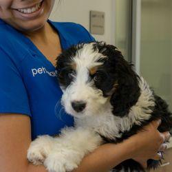 Top 10 Best Free Pet Vaccination In Las Vegas Nv Last Updated