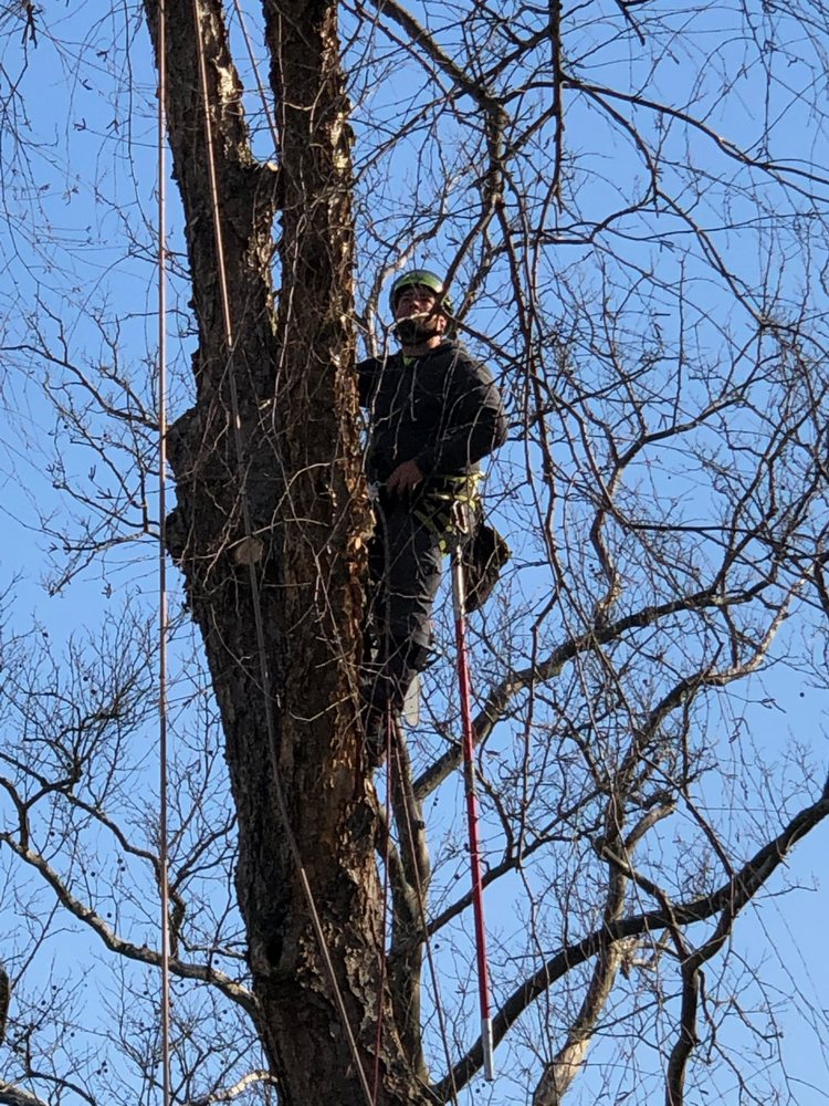 A Cut Above Tree Service: Blackwood, NJ