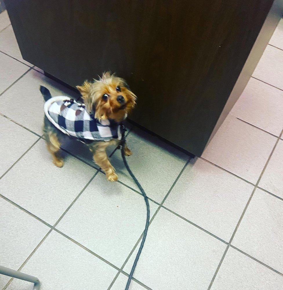 All Pets Veterinary Hospital: 4017 Garrett Rd, Upper Darby, PA