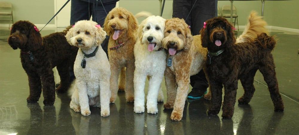 Friendly Grove Resort Spa For Dogs Olympia Wa