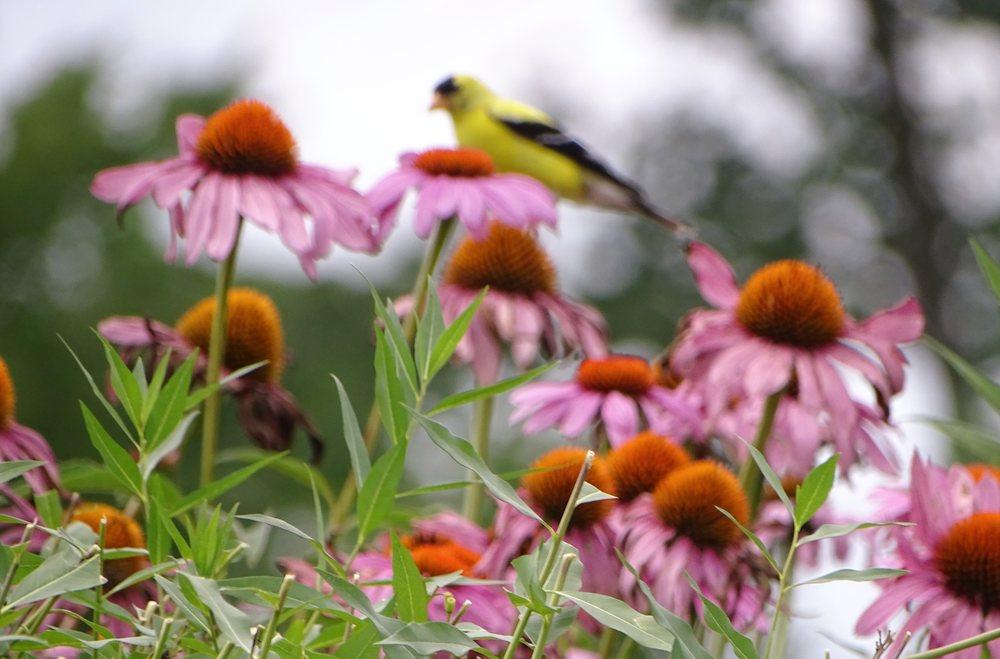Social Spots from Cox Arboretum MetroPark