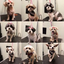 Little Woof Grooming - 40 Photos - Pet Groomers - Lancaster