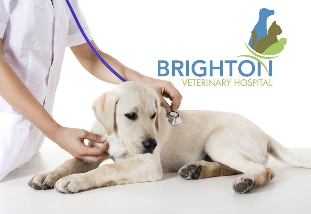 Brighton Veterinary Hospital: 2615 Mississippi St, New Brighton, MN
