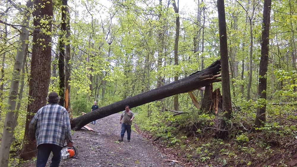 AB American Tree Services: Kingston Springs, TN