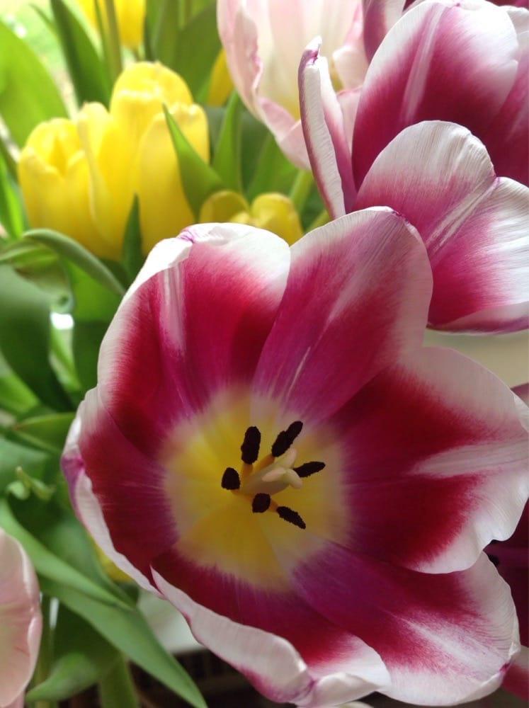 Tolle Blumen Günstiger Preis Jeden Mittwoch Neue Ware Manchmal