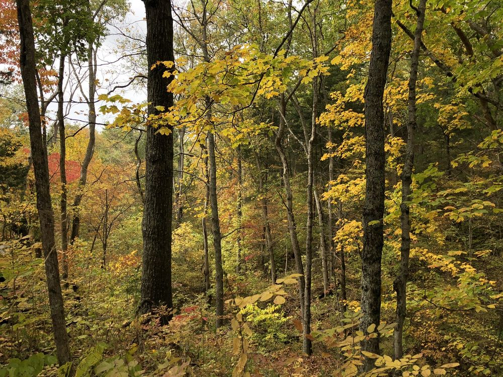 Versailles State Park: 1387 US 50 E, Versailles, IN