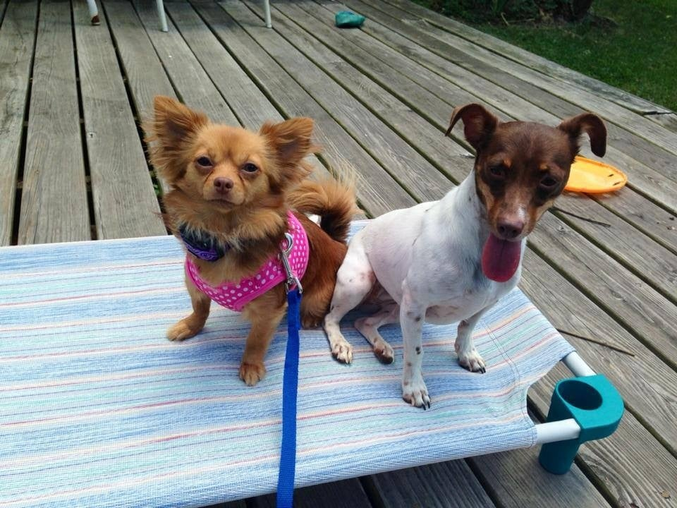 Riverfront Dog Training: Mechanicsburg, PA
