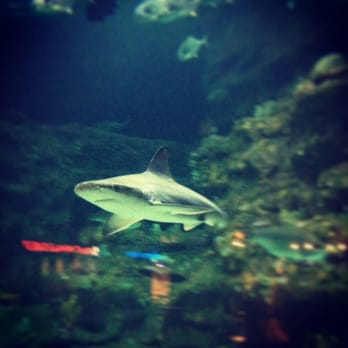 Photo Of The North Carolina Aquarium At Fort Fisher Kure Beach Nc United