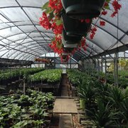 Photo Of Joseph S Nursery Pearland Tx United States Lots Veggies And