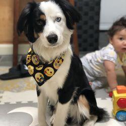 Bark Place Dog Grooming 160 Photos 169 Reviews Pet Groomers