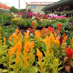 photo of wilsons garden center columbia mo united states - Wilsons Garden Center