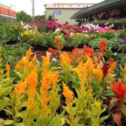 photo of wilsons garden center columbia mo united states - Wilsons Garden Center