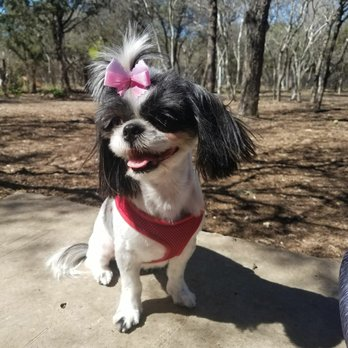 Little debby s dog grooming 54 photos 45 reviews pet for Cool dog spa san antonio