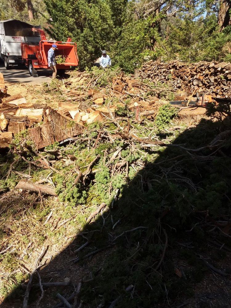Absolute Tree Service: Crestline, CA