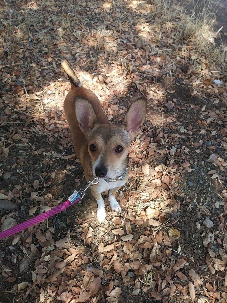 Martin's NorCal Dog Training: 983 Lake Blvd, Redding, CA