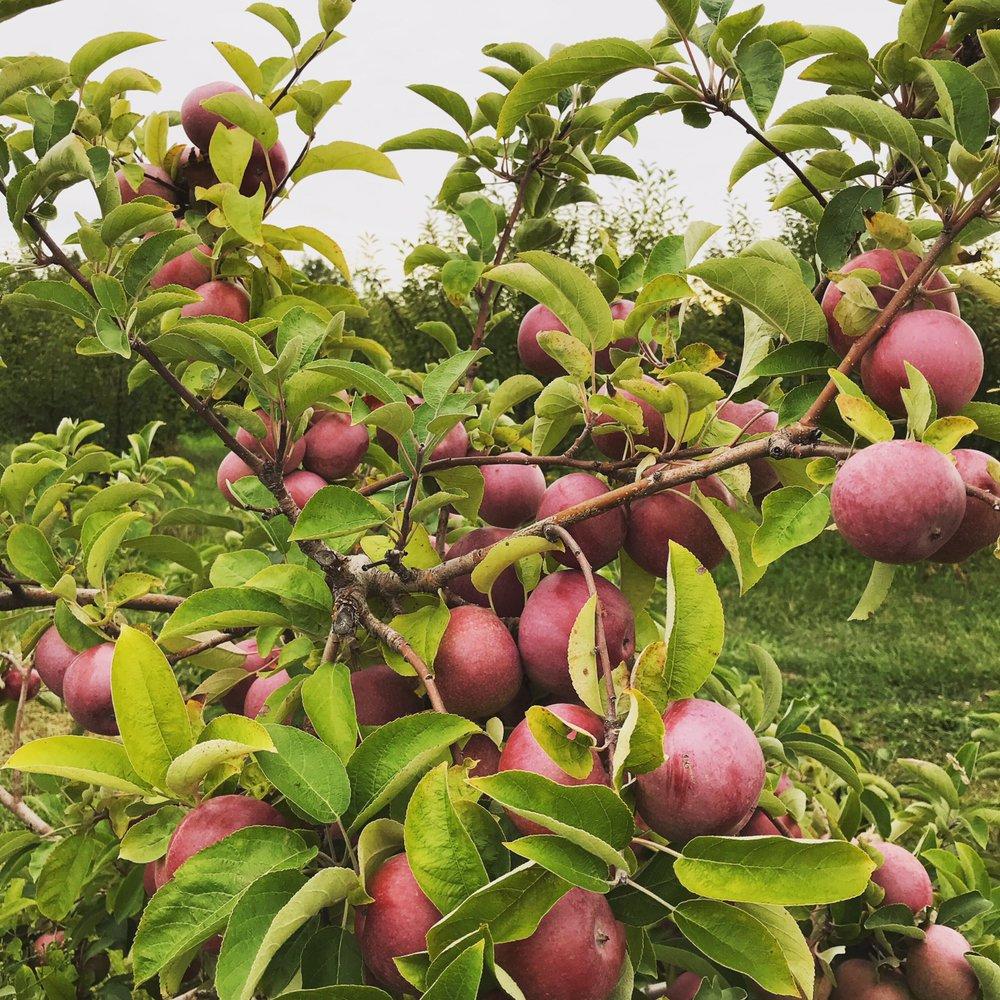 Brookwood Fruit Farm: 7845 Bordman Rd, Almont, MI