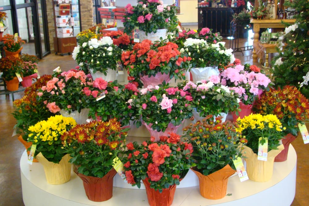 Florists 3520 Candelaria Rd NE Midtown University Albuquerque NM