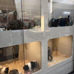 Alley Cat Pet Center - 33 Photos & 66 Reviews - Pet Stores
