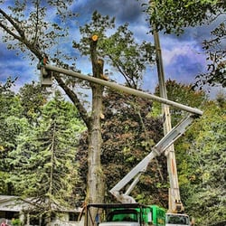 Photo Of South Valley Tree Experts Murray Ut United States