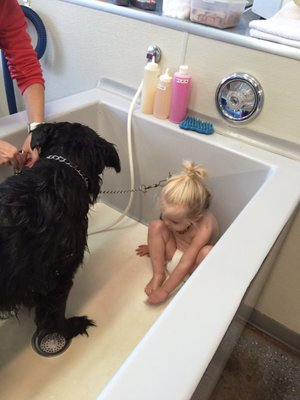 Suds em yourself 192 w 11th ave eugene or pet grooming mapquest solutioingenieria Image collections
