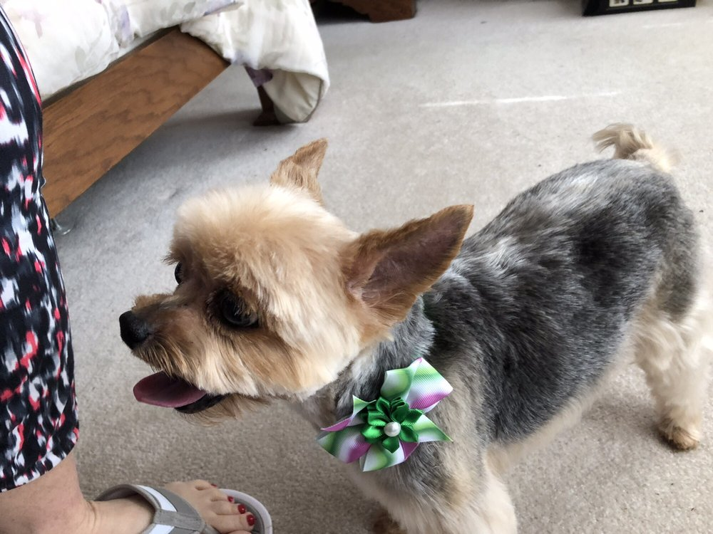 Natalia's Pet Beauty Salon: 25109 Woodfield Rd, Damascus, MD