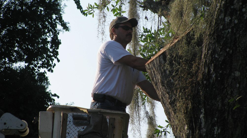 Jacobs Tree Service And Stump Removal: 144 Palmer Sawmill Rd, Crescent City, FL