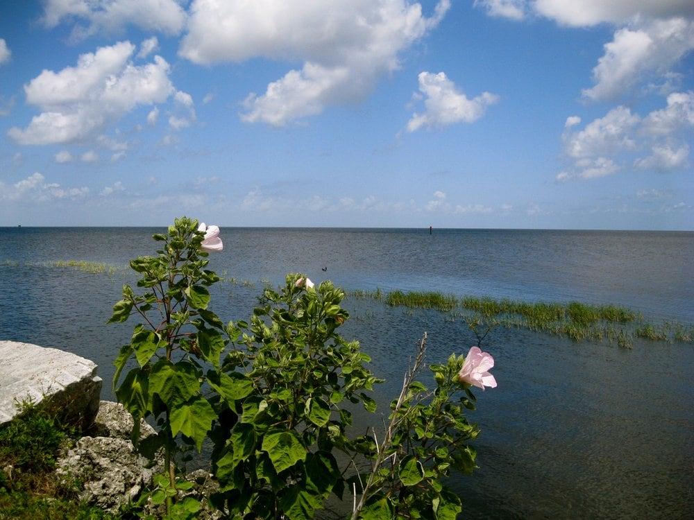 Lake Okeechobee: 55 South Parrott Ave, Okeechobee, FL